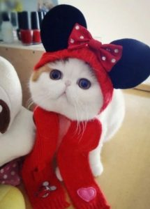 adopt-a-kitten-in-vegas